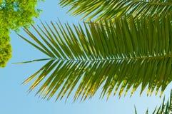 Brunch della palma con il cielo Fotografia Stock Libera da Diritti