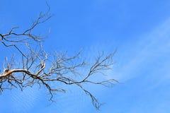 Brunch des Baums Lizenzfreies Stockbild