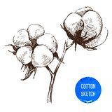 Brunch disegnato a mano del cotone Fotografia Stock