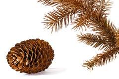 Brunch et cône colorés de pin. Photo stock