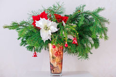 Brunch Fir Tree with young cone and poinsettia in Stock Images