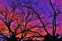 Brunch nudo dell'albero fotografie stock