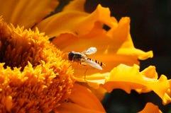 Brunch para este insecto Imagen de archivo