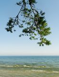 Brunch of pine and sea. Royalty Free Stock Image