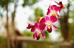 Brunch of purple orchid Stock Photography