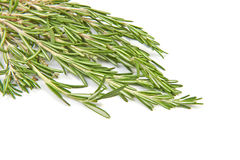 Brunch of rosemary isolated Stock Photos