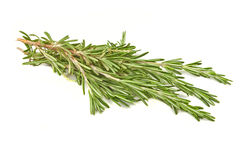 Brunch of rosemary isolated Stock Image