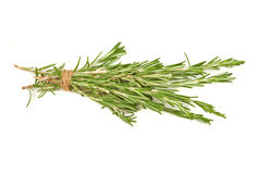 Brunch of rosemary isolated Stock Photography