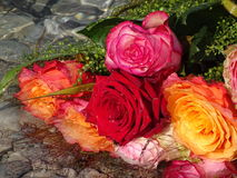 A brunch of roses in the water. In the photo is a brunch of roses in the water Stock Photo