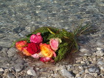 A brunch of roses in the water. In the photo is a brunch of roses in the water Royalty Free Stock Image