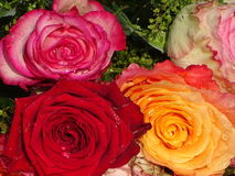 A brunch of roses in the water. In the photo is a brunch of roses in the water Stock Images