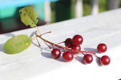 Brunch suave de las cerezas Imagen de archivo libre de regalías