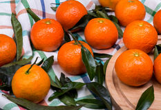 Brunch of tangerines Royalty Free Stock Image