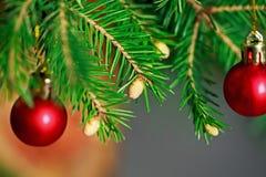 Brunch-Tannen-Baum mit jungem Kegel im Vase Lizenzfreie Stockfotos