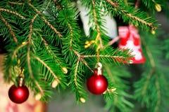 Brunch-Tannen-Baum mit jungem Kegel im Vase Lizenzfreies Stockfoto