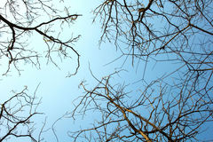 Brunch of tree and blue sky background Royalty Free Stock Photography