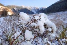 Brunch under snow. Snowy mountains field with covered bush closeup under blue sky. Zaili Alatau, Kazakhstan Stock Image