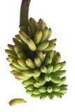 Brunch van bananen Royalty-vrije Stock Fotografie