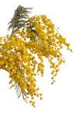 Brunch van mimosa's Stock Afbeelding