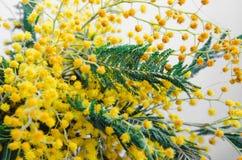 Brunch van mooie gele mimosa De lenteachtergrond, Rustieke bloemen Stilleven, Pasen Stock Fotografie