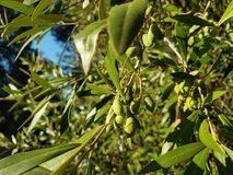 Brunch verde oliva imagen de archivo