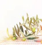 Brunch verde oliva Fotografie Stock Libere da Diritti