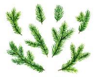 Brunch verdi del pino Illustrazione dell'acquerello Immagine Stock