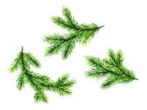 Brunch verdi del pino Illustrazione dell'acquerello Fotografie Stock