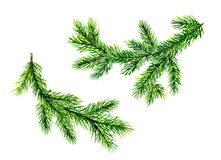 Brunch verdi del pino Illustrazione dell'acquerello Fotografia Stock Libera da Diritti