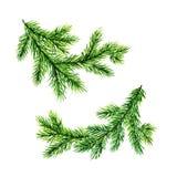 Brunch verdi del pino Illustrazione dell'acquerello Fotografia Stock