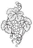 brunch winogron Fotografia Royalty Free
