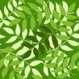 brunches άνευ ραφής Στοκ εικόνες με δικαίωμα ελεύθερης χρήσης