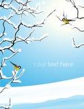 Brunches de los árboles bajo la nieve Imágenes de archivo libres de regalías