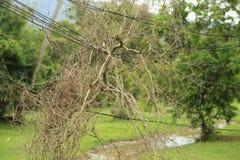Brunches del árbol en el alambre Foto de archivo libre de regalías