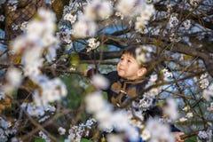 Brunches del flor de los albaricoqueros del melocotón y en la parte posterior del cielo azul Fotos de archivo
