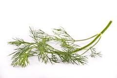 Brunchlet of fresh green dill Stock Image