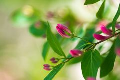 Brunchs avec les fleurs et les feuilles roses de vert photos libres de droits