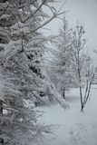 Brunchs d'arbre couverts de couche épaisse de neige en hiver photos stock