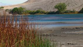 Bruneau sand dunes idaho 66 lake blue. Bruneau Sand Dunes Idaho 66nReeds on Dunes lake shore - BLUE H2OnA JSE Film Xcorps TVn©2017 Stuart Edmondson stock footage