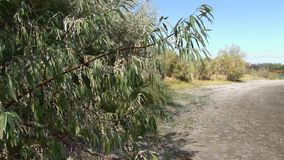 Bruneau sand dunes idaho 60 olive tree stock video