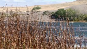 Bruneau sand dunes idaho 64 reeds bottom. Bruneau Sand Dunes Idaho 64 stock footage