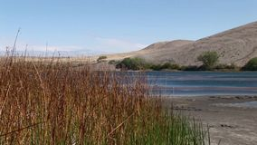 Bruneau sand dunes idaho 44 reeds and lake. Bruneau Sand Dunes Idaho 44 stock footage