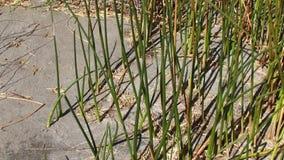 Bruneau sand dunes idaho 58 reeds stock footage