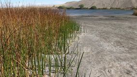 Bruneau sand dunes idaho 49 reeds pan. Bruneau Sand Dunes Idaho 49nReeds growing out of Dunes Lake shoreline PAN UPnA JSE Film Xcorps TVn©2017 Stuart Edmondson stock footage