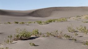 Bruneau sand dunes idaho 57 windy sand. Bruneau Sand Dunes Idaho 57 stock footage