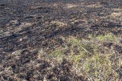 Bruned Grassland Royalty Free Stock Photo