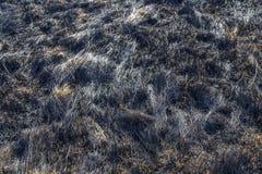 Bruned Grassland Royalty Free Stock Photography