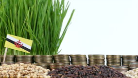 Brunei flag waving with stack of money coins and piles of wheat. And rice seeds stock video