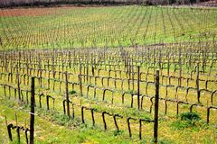 Brunello di Montalcino vineyards Royalty Free Stock Photography