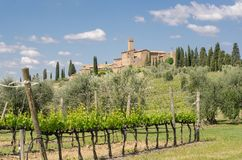 Brunello Di Montalcino wijngaarden royalty-vrije stock foto
